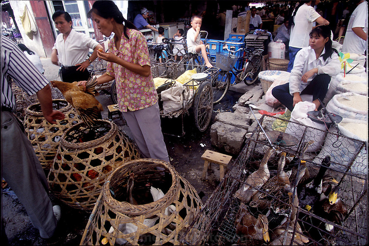 Chicken and ducks for sale in Chinese open markets are shown live then either killed immediately or brought home live. The Chinese insistence on fresh food treats with suspicion anything that is already dead. This is changing somewhat in urban centers as Western style supermarkets become more ubiquitous in the country. (Supporting image from the project Hungry Planet: What the World Eats) Although meat in the United States and Europe mainly comes from factory farms and is sold in shrink-wrapped packages, most animal products elsewhere (as these photographs demonstrate) come from small-scale producers and are sold by butchers.