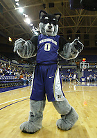December 23, 2010:  Washington Huskies mascot Harry was on hand to entertain the crowed against Georgia Tech.  Georgia Tech defeated Washington 60-27 at the Bank of America Arena in Seattle, WA.