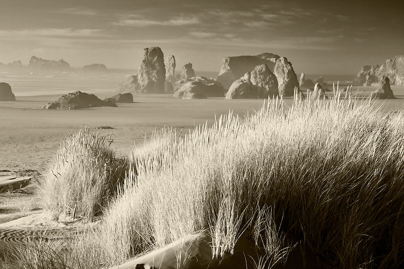 Dune grass and sea stacks at Bandon Beach . Oregon