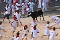 Europe/France/Aquitaine/64/Pyrénées-Atlantiques/Pays-Basque/Bayonne: Courses de vaches lors de Fêtes de Bayonne