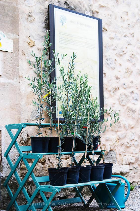 Young olive plants for sale. Moulin Mas des Barres olive mill, Maussanes les Alpilles, Bouches du Rhone, Provence, France, Europe