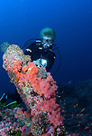 (Multiple values)coral reef Philippines, Puerto Galera, soft coral reef