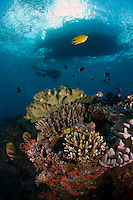 Coral Bommie in the Beqa Lagoon with diver and boat