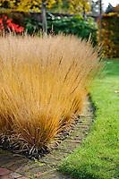 Drifts of Molinia caerulea ssp caerulea 'Poul Petersen'