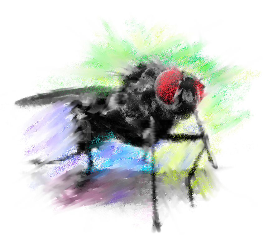 Digital illustration of a house fly with big red eyes.
