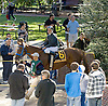 Winning Image before The Endine Stakes at Delaware Park on 10/13/12