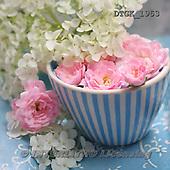 Gisela, FLOWERS, BLUMEN, FLORES, photos+++++,DTGK1953,#f#