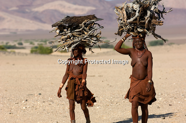 The Himba are a minority group in Namibia, representing less than one per cent of the population. They dust their skin with an ochre dye and never wash. The women go bare-breasted and cover their lower bodies with cloths and animal skins. These women is carrying firewood back to the stockade.