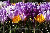 Gisela, FLOWERS, BLUMEN, FLORES, photos+++++,DTGK2076,#f#