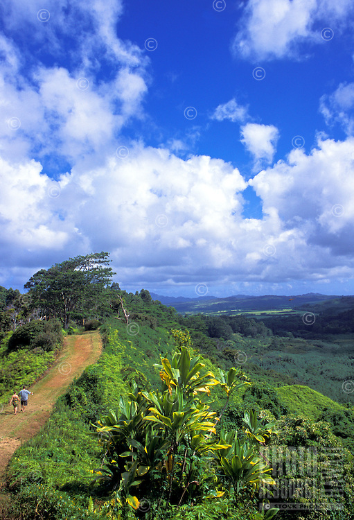 Hikers explore the Kuilau Ridge Trail