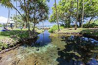 Pond at Richardson Beach Park, Hilo, Big Island, Hawaii