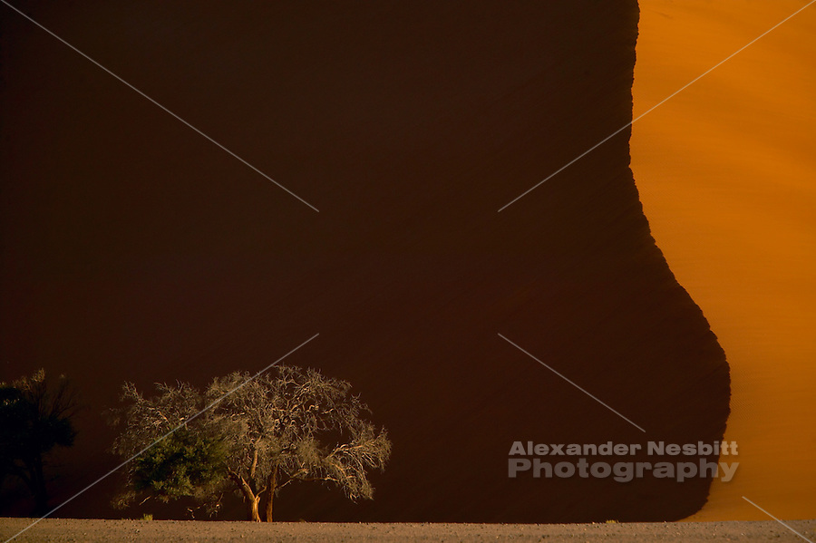Namibia, 2004 - The massive, stationary, red sand dune, 'Dune 45' forms a famous land mark at kilometer 45 along the access road to the Sossusvlei pan, deep in the Namib desert.