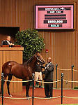 Hip # 132 Distorted Humor - My Miss Storm Cat colt sold for $850,000 at the Keeneland September Yearling Sale.  September 10, 2012.