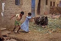 Afrique/Egypte/Env de Louxor/Ancienne Thèbes: Enfants jouant au football dans la rue devant un boeuf assis