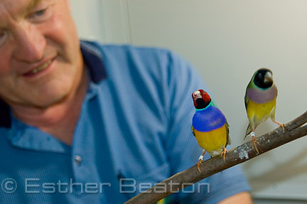 Mike Fidler, sponsor and supporter of Gouldian Finch research, Martinville, New South Wales
