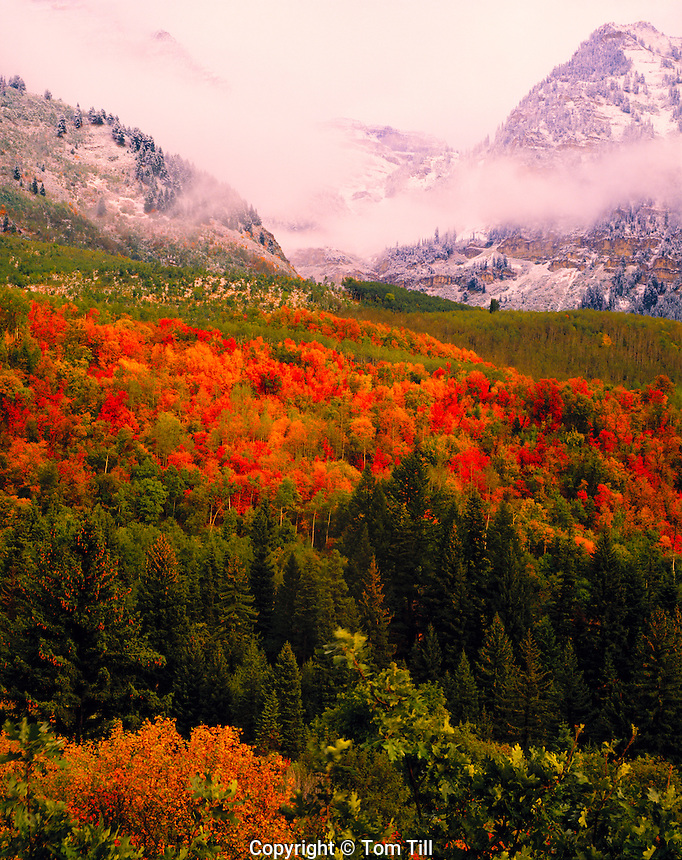 Clearing Storm, Mt. Timpanogos, Utah   Wasatch Mountains    Uinta National Forest   Oaks and maples in autumn