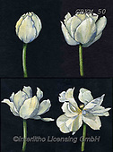 Kate, FLOWERS, BLUMEN, FLORES, paintings+++++Bud to flower 1-4,GBKM50,#f#, EVERYDAY ,tulip,tulips