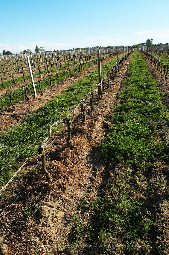 vineyard chateau reysson haut medoc bordeaux france