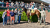 Modern Cowboy winning at Delaware Park on 5/25/13.