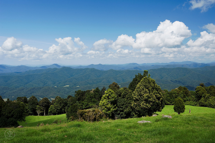 Green fields give way to forested slopes near Dorrigo, New South Wales, Australia.