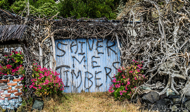 """Shiver Me Timbers"" at Otago Peninsula, South Island, New Zealand"