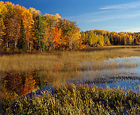 Vilas County, WI<br /> Autumn hardwood forest and shallow marsh at the edge of West Plum Lake,<br /> Northern Highland American Legion State Forest
