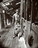 NEW ZEALAND, portrait of a cowboy preparing to shear a sheep, Queenstown (B&W)