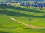 Whitman County, WA<br /> Windmill and dirt road nestled in a valley among the Palouse country's rolling hills