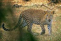 3_Sri Lanka_Wildlife