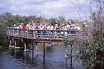 Boardwalk and visitors at Everglades National Park