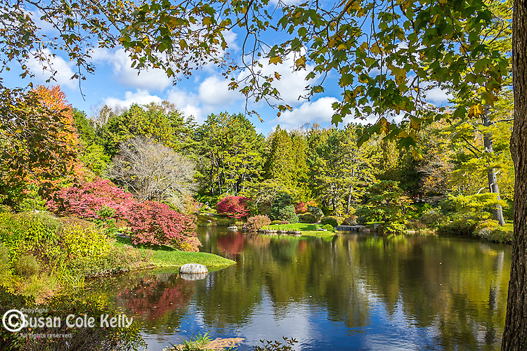 Asticou Azalea Garden in autumn in Northeast Harbor, Maine, USA