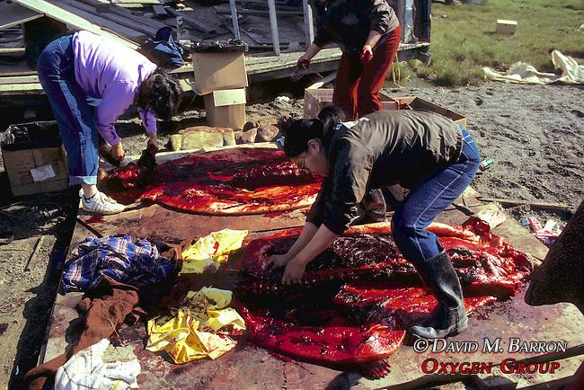 Cutting & Harvesting Bearded Seal