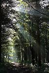 Dappled light through trees onto a woodland path in England
