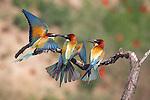 Hungarian Spring Birds