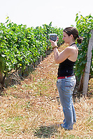 Radost filming in the vineyard. Kantina Miqesia or Medaur winery, Koplik. Albania, Balkan, Europe.