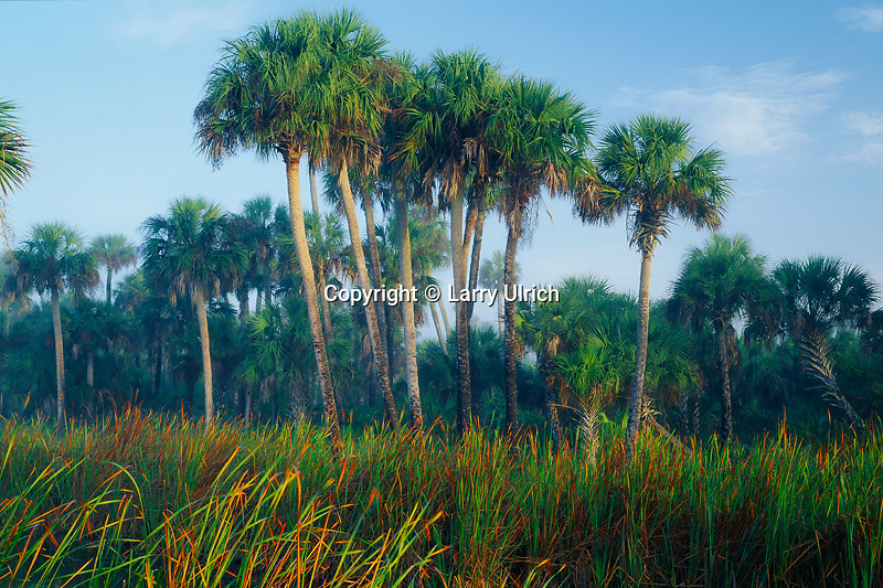 Cattails and sable palms<br />