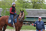 Maximum Security with exercise rider Edelberto Rivas and held by assistant trainer Jose Hernandez, checks out his surroundings at Monmouth Park in Oceanport, New Jersey on Thursday morning May 9, 2019, heading to the track for the first time since the Kentucky Derby. Photo By Bill Denver/EQUI-PHOTO