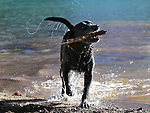 Fin plays in Round Top Lake near Kirkwood, Ca., on Saturday, Oct. 7, 2017. <br />Photo by Cathleen Allison/Nevada Momentum