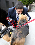 Nevada Sen. Mark Manendo, D-Las Vegas, plays with rescue beagles Dean and Luke outside the Legislative Building in Carson City, Nev., on Tuesday, March 24, 2015. Manendo introduced a bill Tuesday that would require labratories that conduct research on dogs and cats to put the animals up for adoption after the study work.  <br /> Photo by Cathleen Allison