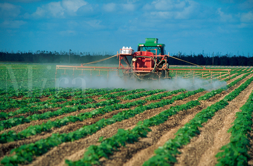 Chemical spraying on fields of squash plants