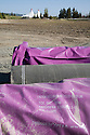 Pipes covered with purple sleeves await use near Shoreline Park. The cities of Palo Alto and Mountain View are jointly constructing a reclaimed water pipeline to carry recycled water from the Palo Alto Regional Water Quality Control Plant to customers along East Bayshore Parkway and Mountain View's North Bayshore area.