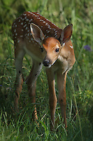 Very young fawn hiding in the shadows..
