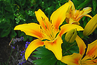 Flower Close-up at Lakeside, Ohio