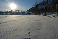 Gulo gulo tracks,