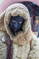 Europe/Allemagne/Bade-Würrtemberg/Forêt Noire/Haslach:  Défilé traditionnel avec l'âne: Biggeresel, coutume de la Saint Nicolas _ Portrait de Pelzmärtel (Le méchant)