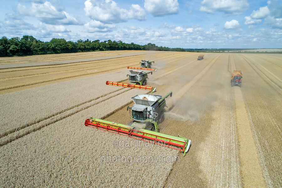 Claas Lexion 780 combine with 13.8m header - Cambridgeshire, August