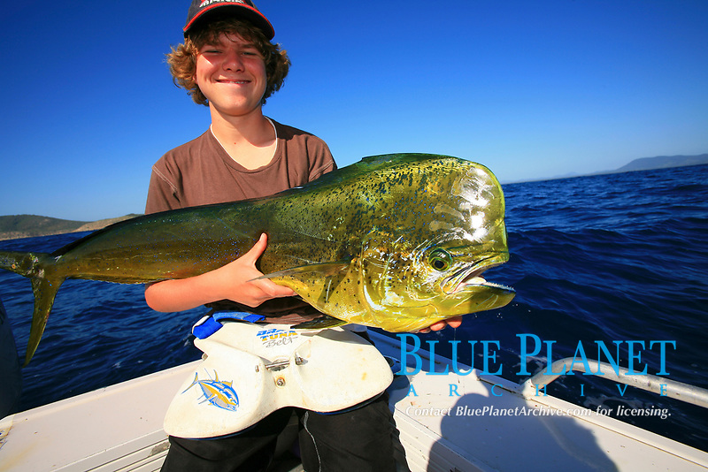 Mahi mahi, Coryphaena hippurus, dolphinfish, dorado, sportfishing, and boy angler