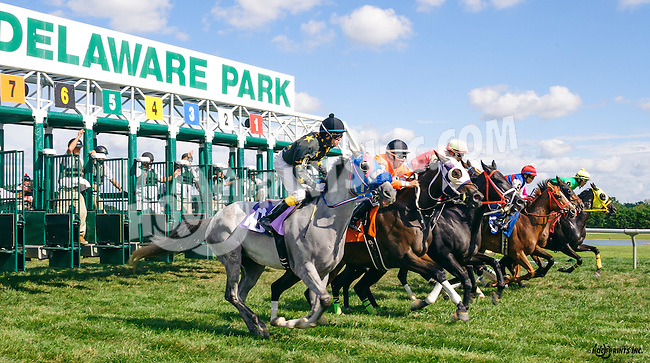 Lil' Smartiepants winning at Delaware Park on 9/2/16