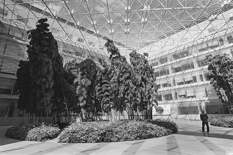 The Judiciary/Thurgood Marshall Federal Judiciary Building, inside view of bamboo tree in April 1997. (Photo by Laura Patterson/CQ Roll Call via Getty Images)