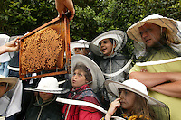 Near Hyères in the Var, a nursery school class discovers beekeeping at the Pradet educational apiary.